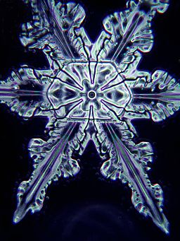 Snowflake under a microscope by Doc. RNDr. Josef Reischig, CSc. / CC BY (https://creativecommons.org/licenses/by/3.0)