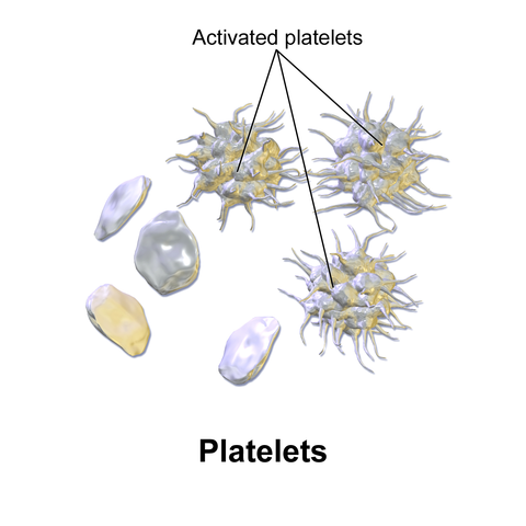Platelets,Blausen.com 2014.Medical gallery of Blausen,Medical 2014 WikiJournal of Medicine 1(2).DOI:10.15347/wjm/2014.010.ISSN 2002-443,CC3.0,https://commons.wikimedia.org/w/index.php?curid=28223979