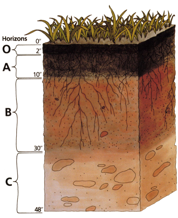 Soil profile by US Department of Agriculture - https://www.nrcs.usda.gov/wps/portal/nrcs/main/soils/edu/, Public Domain, https://commons.wikimedia.org/w/index.php?curid=1343062