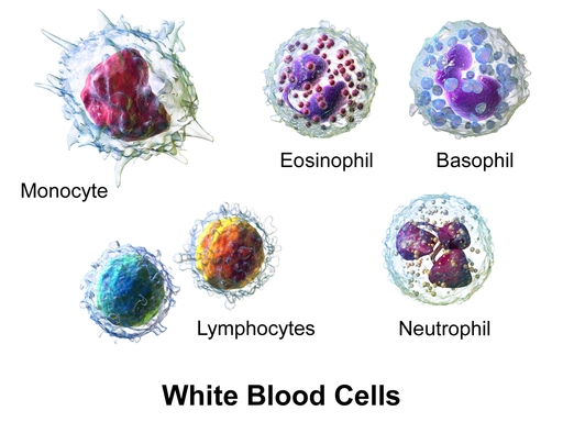 White Blood Cells Types Observations Counts And Urine