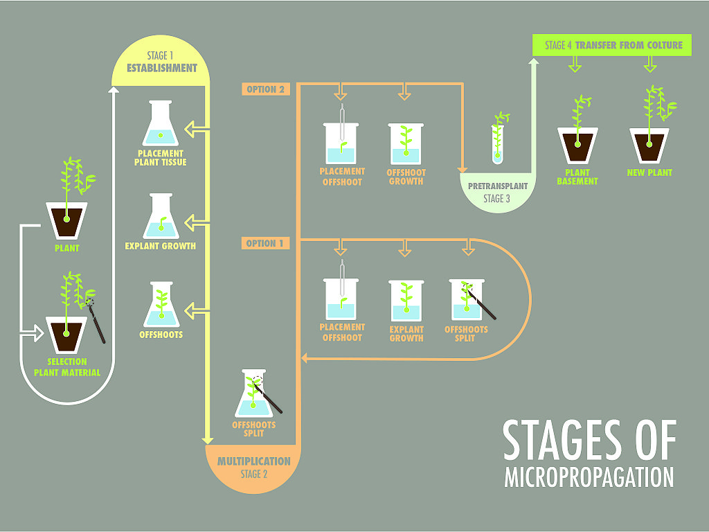 Micropropagation: Image is released under CC-BY-SA licence. Attribution goes to