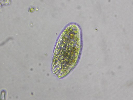 By Donald Hobern from Copenhagen, Denmark (Protozoa sp.) [CC BY 2.0 (http://creativecommons.org/licenses/by/2.0)], via Wikimedia Commons