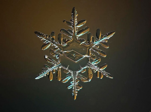 Snowflake under a microscope by Fedegrasso / CC BY (https://creativecommons.org/licenses/by/4.0)