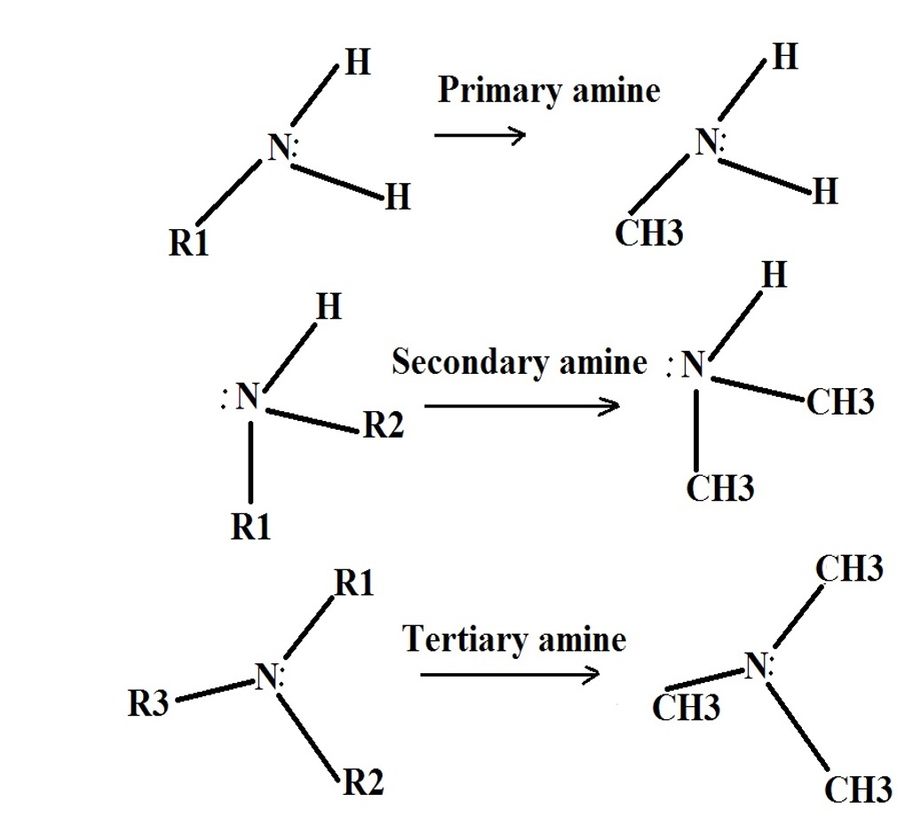Primary, Secondary and Tertiary Amines Structure. Credit: MicroscopeMaster.com