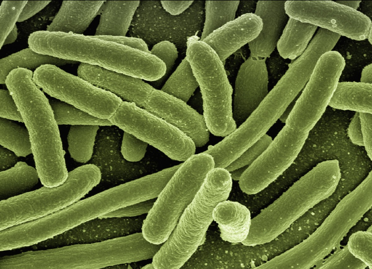 Bacteria infection in plants, public domain