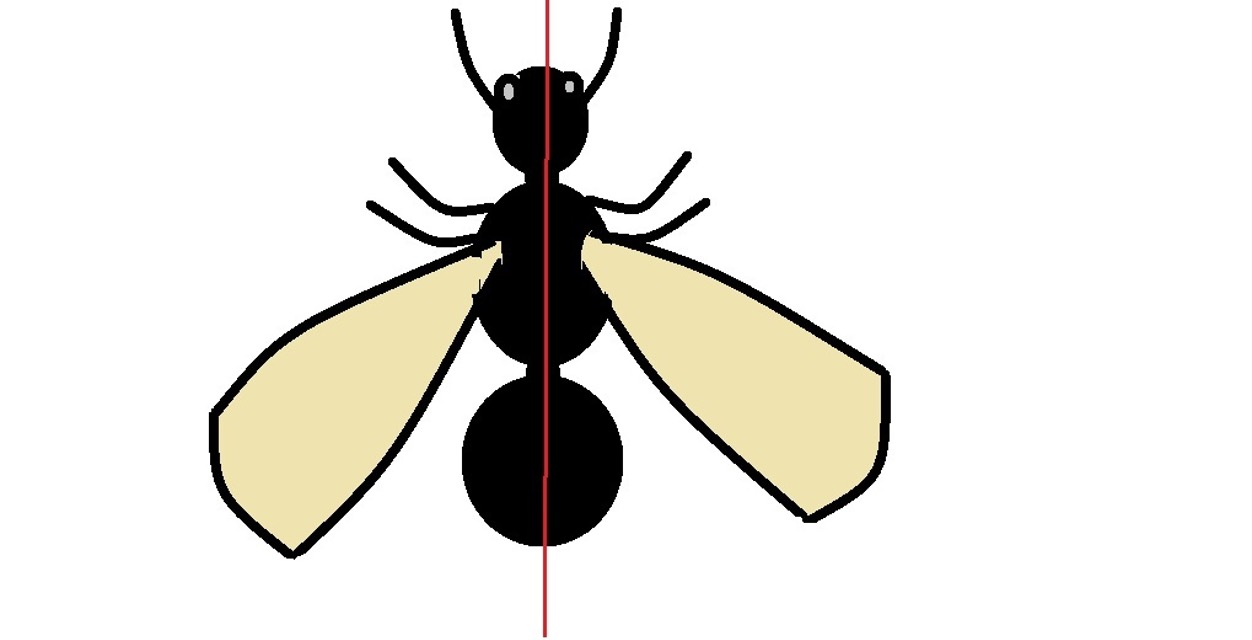 An image representing bilateral symmetry. The red line dividing the insect into two halves shows how each half is a mirror image of the other half. Credit: MicroscopeMaster.com