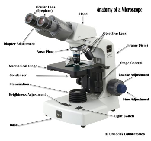 Parts of a compound microscope with diagram and functions anatomy of a microscope ccuart