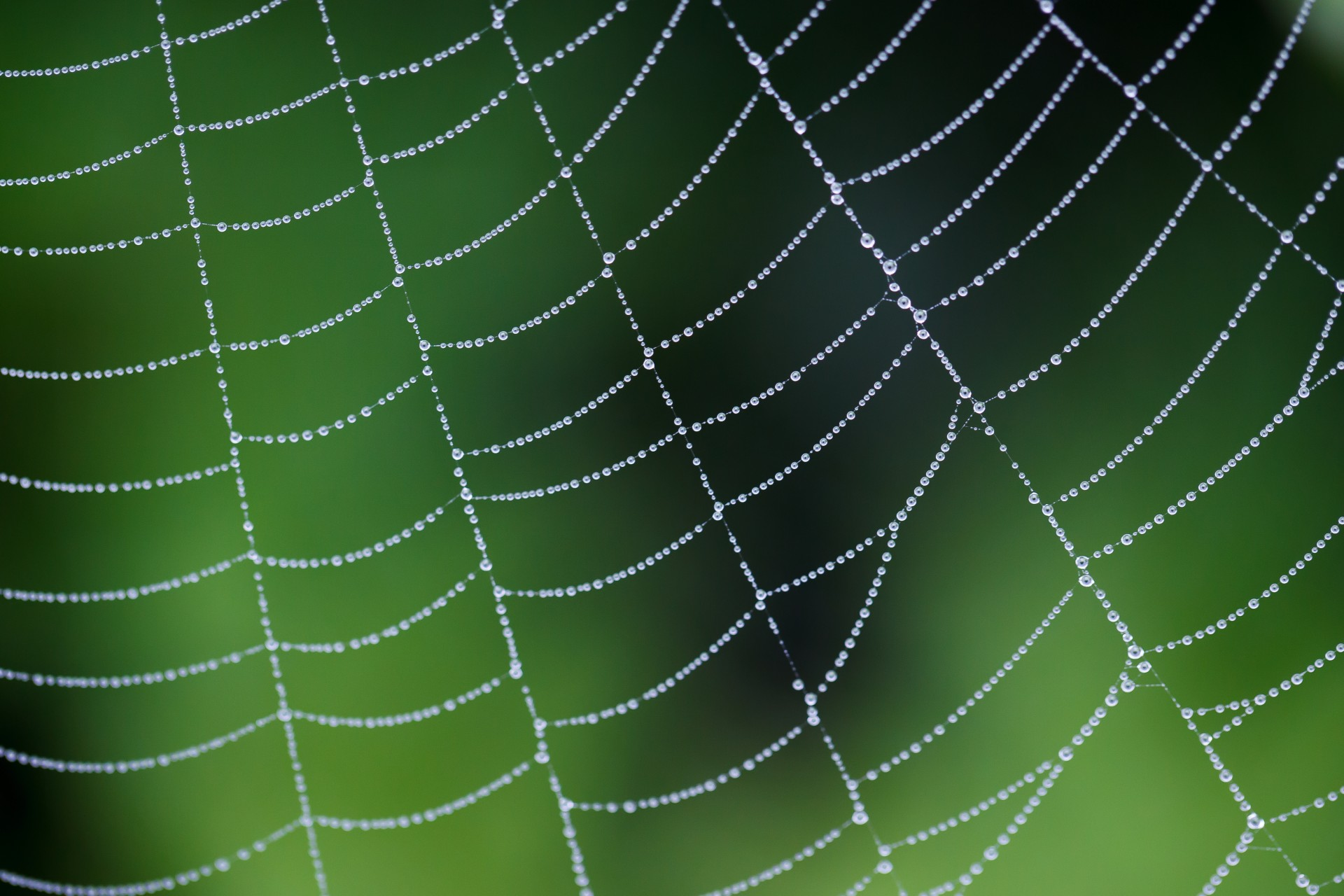 how to create a web spider