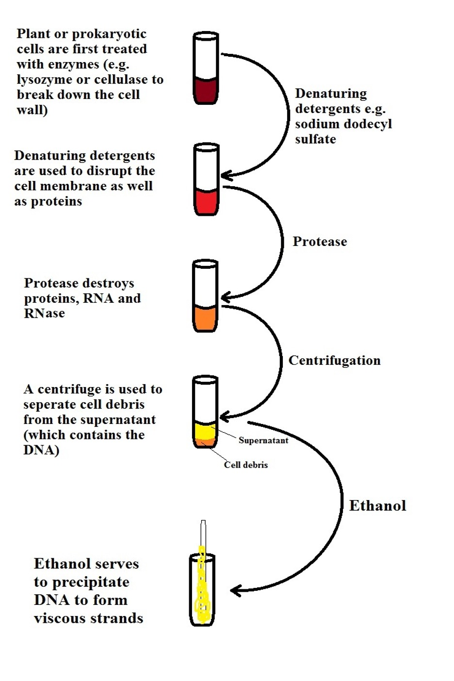 General representation of DNA isolation and purification by MicroscopeMaster.com