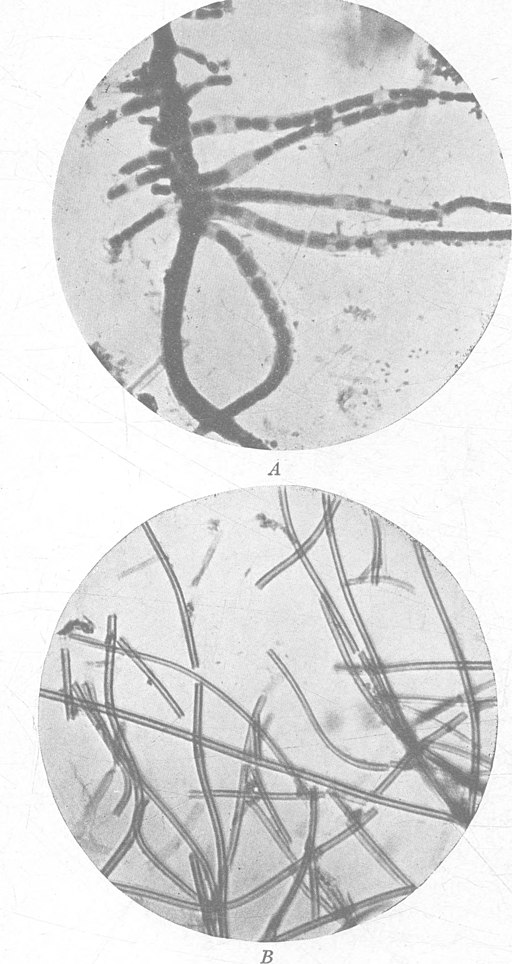 A laboratory manual of soil bacteriology by Fred, Edwin Broun, 1887-1981 / No restrictions/public domain