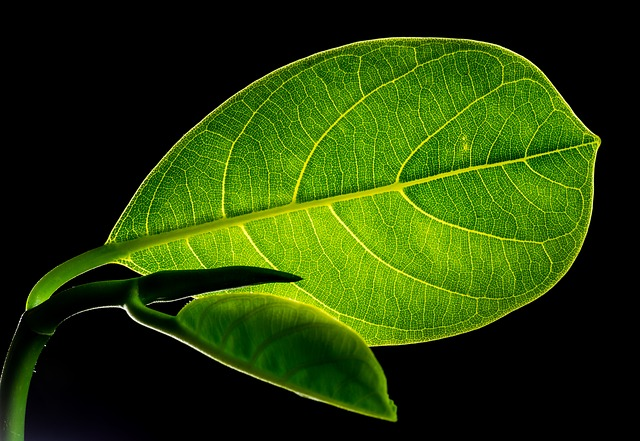 Leaf Image by Josch13 from Pixabay