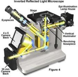 Inverted Microscope Diagram