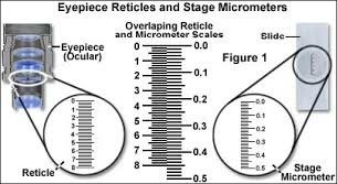 Stage Micrometer Measurement