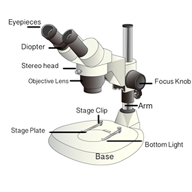 Stereo Microscope Diagram by DBCLS 統合TV, CC BY 4.0 <https://creativecommons.org/licenses/by/4.0>, via Wikimedia Commons for microscope image and labels by MicroscopeMaster.com