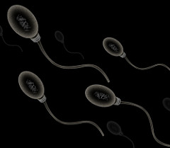 Sperm https://creativecommons.org/licenses/by/2.0/ Unaltered image from Zappy's,Technology Solutions on Flickr.com